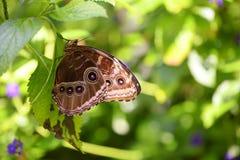 Mooie Vlinder Royalty-vrije Stock Foto's