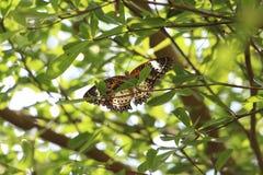 Mooie Vlinder Stock Foto's
