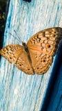 Mooie vlinder in aard stock foto