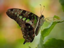 Mooie Vlinder in Chester stock fotografie