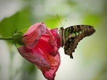 Mooie Vlinder in Chester royalty-vrije stock fotografie