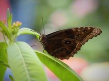 Mooie Vlinder in Chester royalty-vrije stock afbeelding