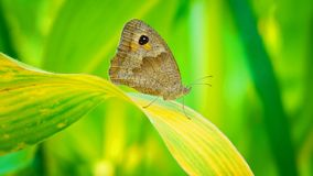 Mooie vlinder die zich op het blad bevinden royalty-vrije stock afbeeldingen