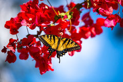 Mooie Vlinder op Bloem Stock Foto's