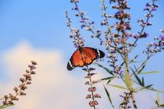 Mooie vlinder op de bloem royalty-vrije stock foto's