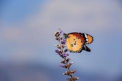 Mooie vlinder op de bloem royalty-vrije stock afbeeldingen