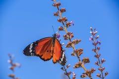 Mooie vlinder op de bloem royalty-vrije stock foto