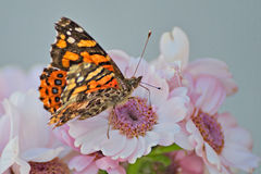 Mooie vlinder op een bloem stock afbeelding