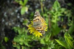 Mooie vlinder op een bloem stock afbeeldingen