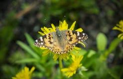 Mooie vlinder op een bloem royalty-vrije stock foto
