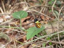 Mooie vlinder in Sao Paulo Royalty-vrije Stock Afbeeldingen
