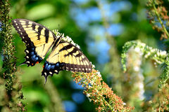 Mooie vlinder van Aard Royalty-vrije Stock Afbeeldingen