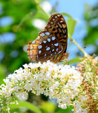 Mooie vlinder van Aard Stock Fotografie