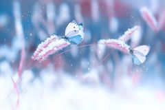 Mooie vlinders in de sneeuw op het wilde gras op een blauwe en roze achtergrond Kerstmis natuurlijke imag van de sneeuwval Artist royalty-vrije stock foto's