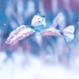 Mooie vlinders in de sneeuw op het wilde gras op een blauwe en roze achtergrond Kerstmis natuurlijke imag van de sneeuwval Artist stock afbeelding