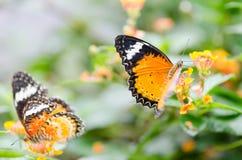 Mooie vlinders op bloemen Stock Afbeeldingen