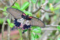 Mooie vlinderzitting op de bladeren van de bomen Stock Foto's