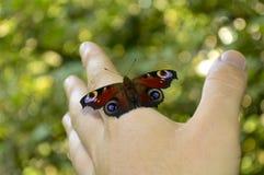 Mooie vlinderzitting op zijn hand stock foto's