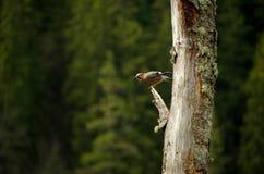 Mooie vogel Stock Foto
