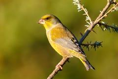 Mooie vogel in de aard stock foto