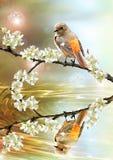 Mooie vogel die in het pond kijkt Stock Foto