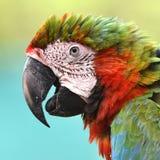 Mooie vogel groene gevleugelde ara royalty-vrije stock afbeelding