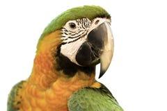 Mooie vogel headshot op witte achtergrond Stock Foto's