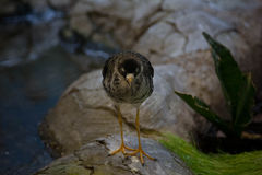 Mooie vogel op achtergrond Stock Afbeeldingen