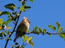 Mooie vogel op een mooie dag Stock Fotografie
