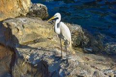 Mooie vogel op zeeleeuwengebied bij Seaworld-Themapark stock afbeelding