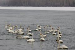 Mooie vogels in de vroege lente bij het strand Stock Afbeeldingen