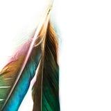 Mooie vogelveer stock afbeeldingen