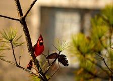Mooie vogelzitting op de tak Royalty-vrije Stock Foto