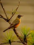 Mooie vogelzitting op de tak Stock Afbeelding
