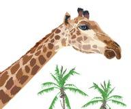 Mooie volwassen Giraf met kokospalm Stock Foto