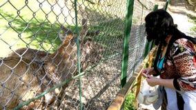 Mooie volwassen vrouwen voedende herten die in het park of het bos lopen stock video