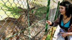 Mooie volwassen vrouwen voedende herten die in het park of het bos lopen stock videobeelden