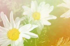 Mooie vonkende bloemen Royalty-vrije Stock Afbeeldingen