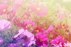 Mooie vonkende bloemen Royalty-vrije Stock Foto