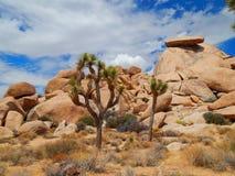 Mooie Vreemde Landschappen in de Woestijn van Californië Royalty-vrije Stock Foto's