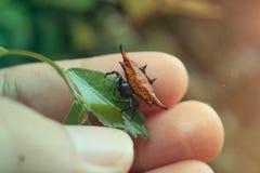 Mooie vriendschappelijke geschilde spingang op blad Stock Fotografie