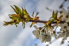 Mooie vroege de lentebloemen stock afbeelding