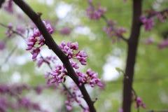Mooie vrouw in de lente Royalty-vrije Stock Fotografie