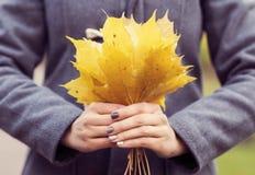 Mooie vrouw die in park loopt Meisje over seizoengebonden de herfstachtergrond Royalty-vrije Stock Foto