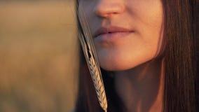 Mooie vrouw met oortarwe in het sensuele portret van de zonlichtzonsondergang op het gebied van de de zomeravond atmosferisch oge stock footage