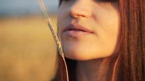 Mooie vrouw met oortarwe in het sensuele portret van de zonlichtzonsondergang op het gebied van de de zomeravond atmosferisch oge stock video