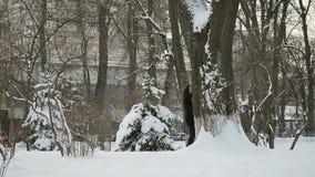 Mooie vrouwenedelen uit de grote sneeuwboom in het de winterpark stock videobeelden