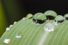 Mooie waterdaling op groene bladmacro Stock Afbeeldingen