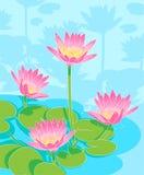 Mooie waterlilys royalty-vrije illustratie