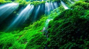 Mooie waterval in het groene bos Royalty-vrije Stock Afbeeldingen